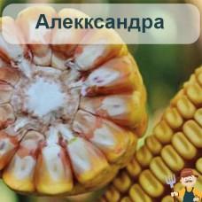 Семена кукурузы Алекксандра