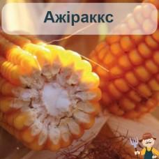 Насіння кукурудзи Ажіраккс