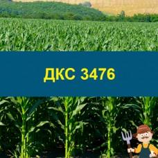 Насіння кукурудзи ДКС 3476
