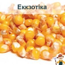 Насіння кукурудзи Еккзотіка