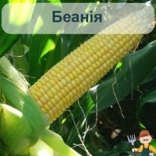Насіння кукурудзи Беанія