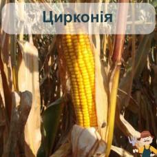 Насіння кукурудзи Цирконія