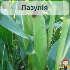 Насіння кукурудзи Лазулія