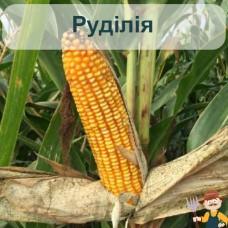 Насіння кукурудзи Руділія