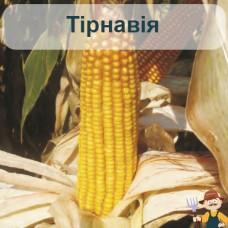 Насіння кукурудзи Тірнавія