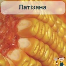 Насіння кукурудзи Латізана