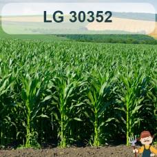Насіння кукурудзи ЛГ 30352