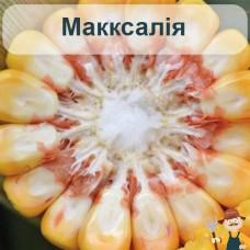 Насіння кукурудзи Макксалія