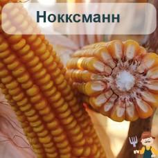 Насіння кукурудзи Нокксманн