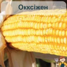Насіння кукурудзи Окксіжен