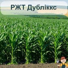 Насіння кукурудзи РЖТ Дубліккс