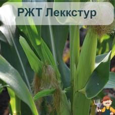 Насіння кукурудзи РЖТ Леккстур