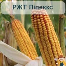 Семена кукурузы РЖТ Липеккс