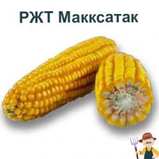 Насіння кукурудзи РЖТ Макксатак