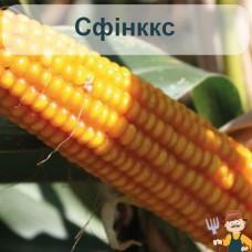 Насіння кукурудзи Сфінккс
