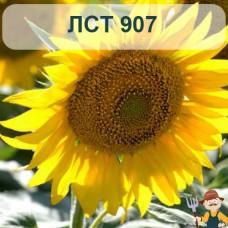 Насіння соняшника ЛСТ 907