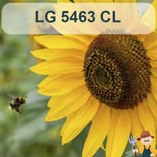Насіння соняшника ЛГ 5463 КЛ