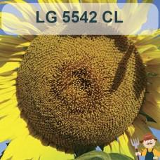 Насіння соняшника ЛГ 5542 КЛ