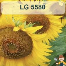 Насіння соняшника ЛГ 5580