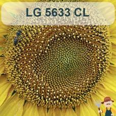 Насіння соняшника ЛГ 5633 КЛ