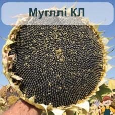 Насіння соняшника Мугллі КЛ
