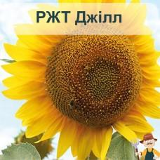 Насіння соняшника РЖТ Джілл